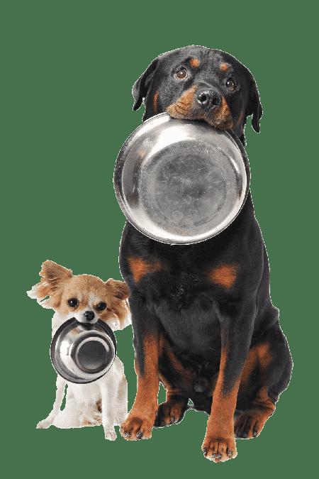 סוגי מזונות לכלבים