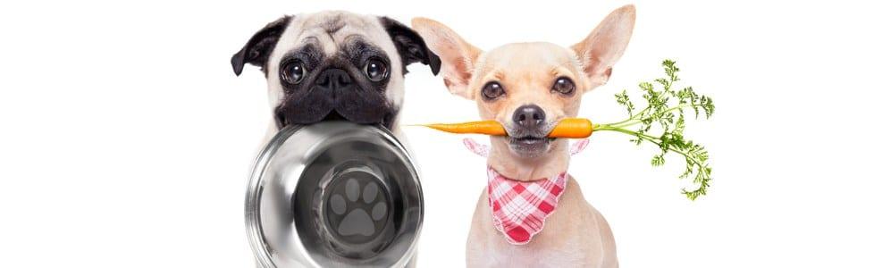 סוגי מזונות מומלצים לכלבים