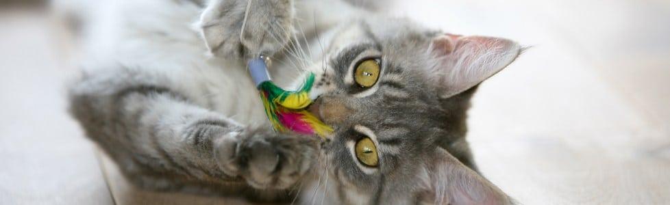חתולים ומשחקים: חשיבות המשחקים וכיצד לעשות זאת