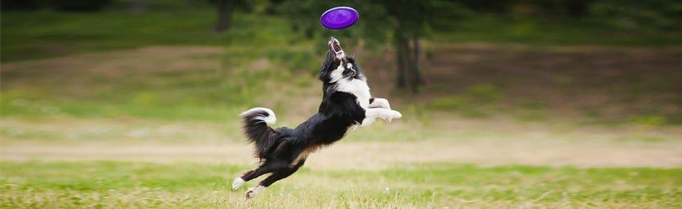 כלבים וצעצועים: הנחיות לרכישת צעצוע חדש לכלב