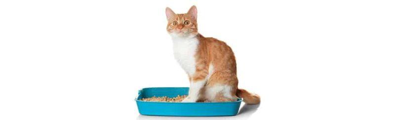 איך בוחרים חול לשירותים של החתול ממגוון הרחב שיש בשוק?