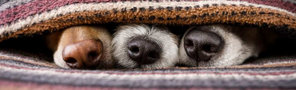 איך דואגים לחיות מחמד במזג אויר סוער