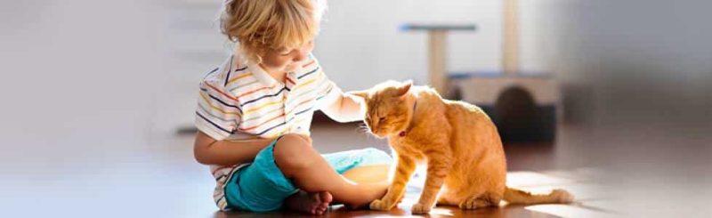 אימוץ חתולים בימי קורונה