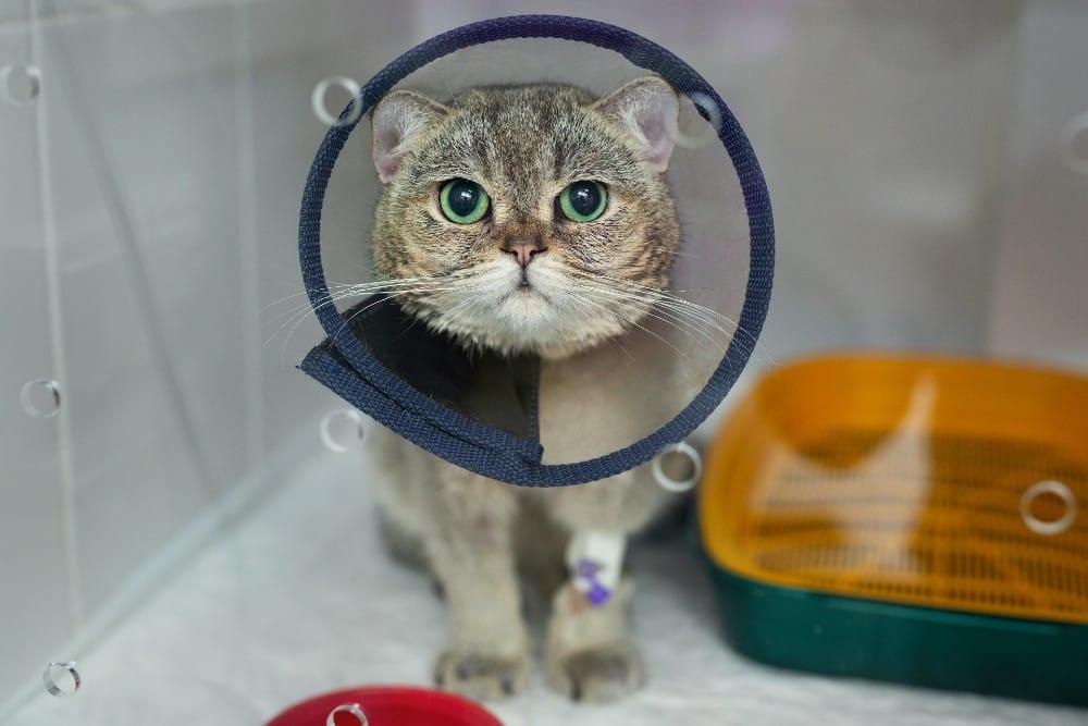 מחלות נפוצות אצל חתולים: כיצד לזהות אותן ומה לעשות