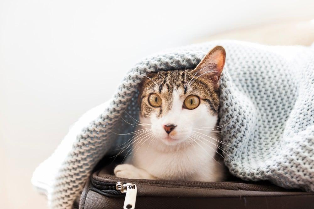 שוקלים לאמץ חתול שני? הטיפים האלה יעזרו לכם במשימה