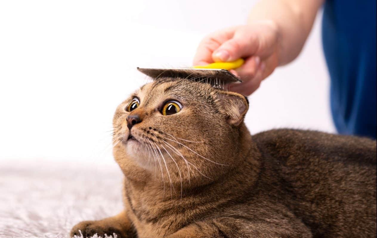 גלו כיצד לטפח את הפרווה והעור של החתול שלכם בצורה בריאה