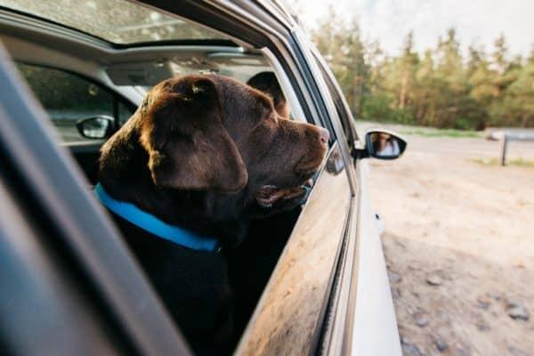 גלו איך לשמור על הכלב שלכם בזמן נסיעות