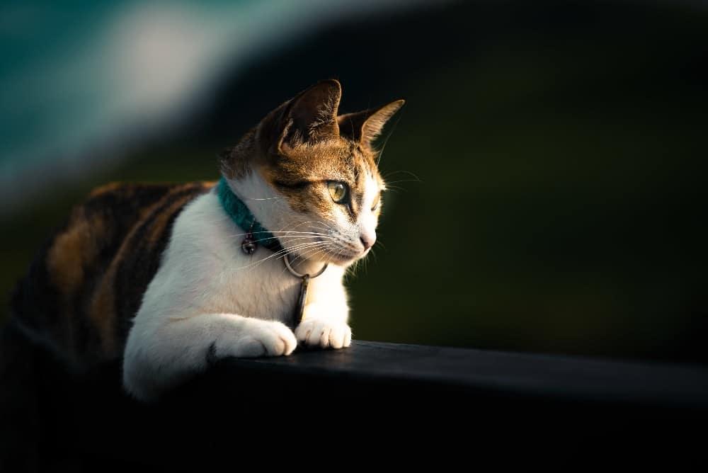 כמה זמן חתולים יכולים להישאר לבד?