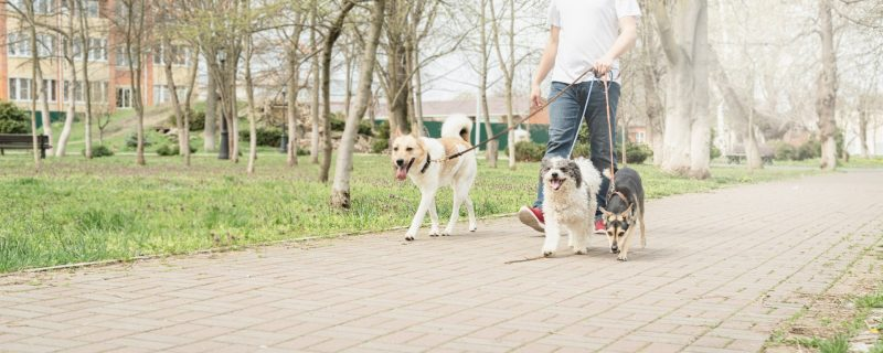 איך לבחור דוג ווקר לכלב שלכם